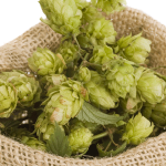 Hops in beer making